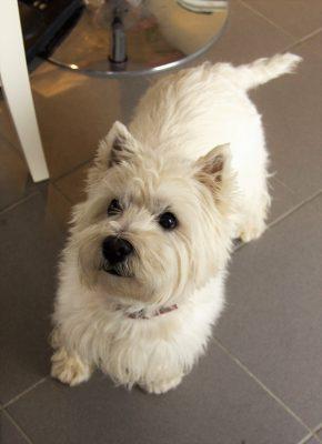 Haushund Diego ist genauso süß wie die Leckereien im Café – nur flauschiger!