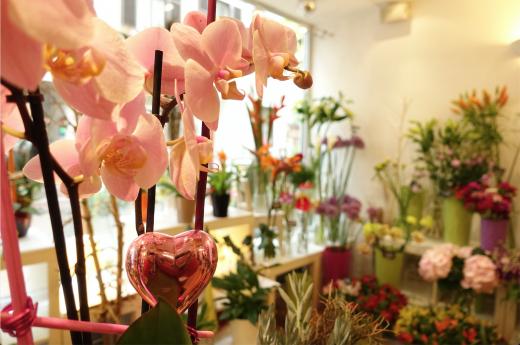 Topfpflanzen, Schnittblumen und hübsche Deko im flowerpower